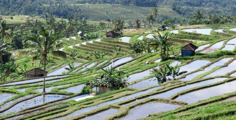 5 cose da fare a Ubud