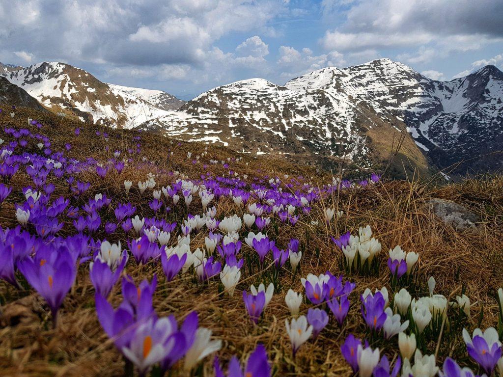 sentiero dei fiori capanna 2000