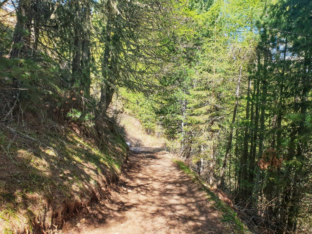 bosco di conifere rifugio gardeccia