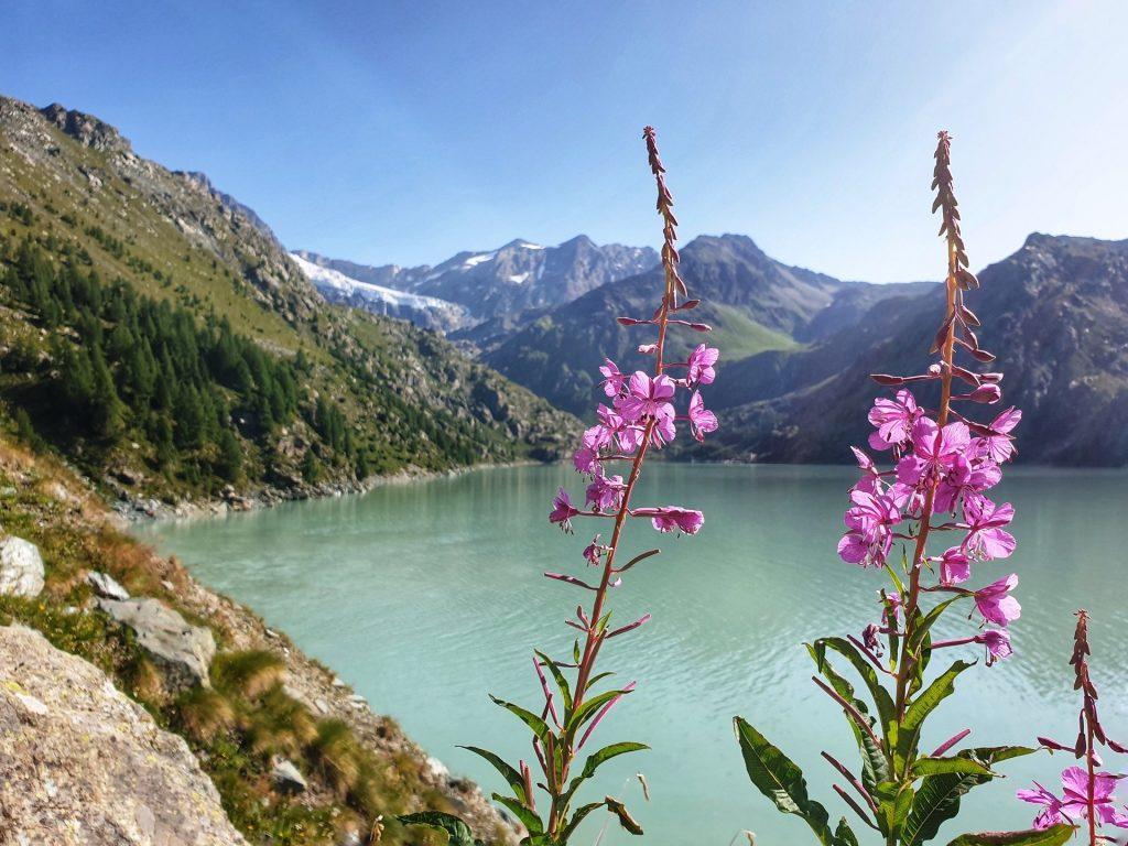 fiori lago di gera