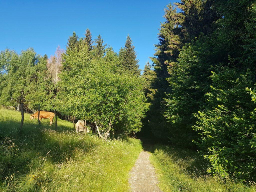 Inizio del sentiero Colma di Sormano - Monte Palanzone