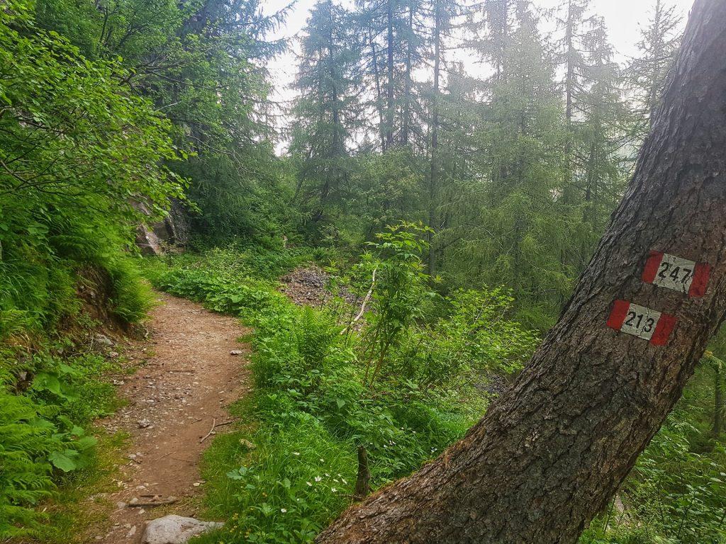 sentiero 247 bosco