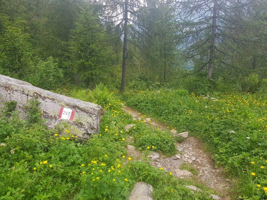 sentiero 247 prati carona