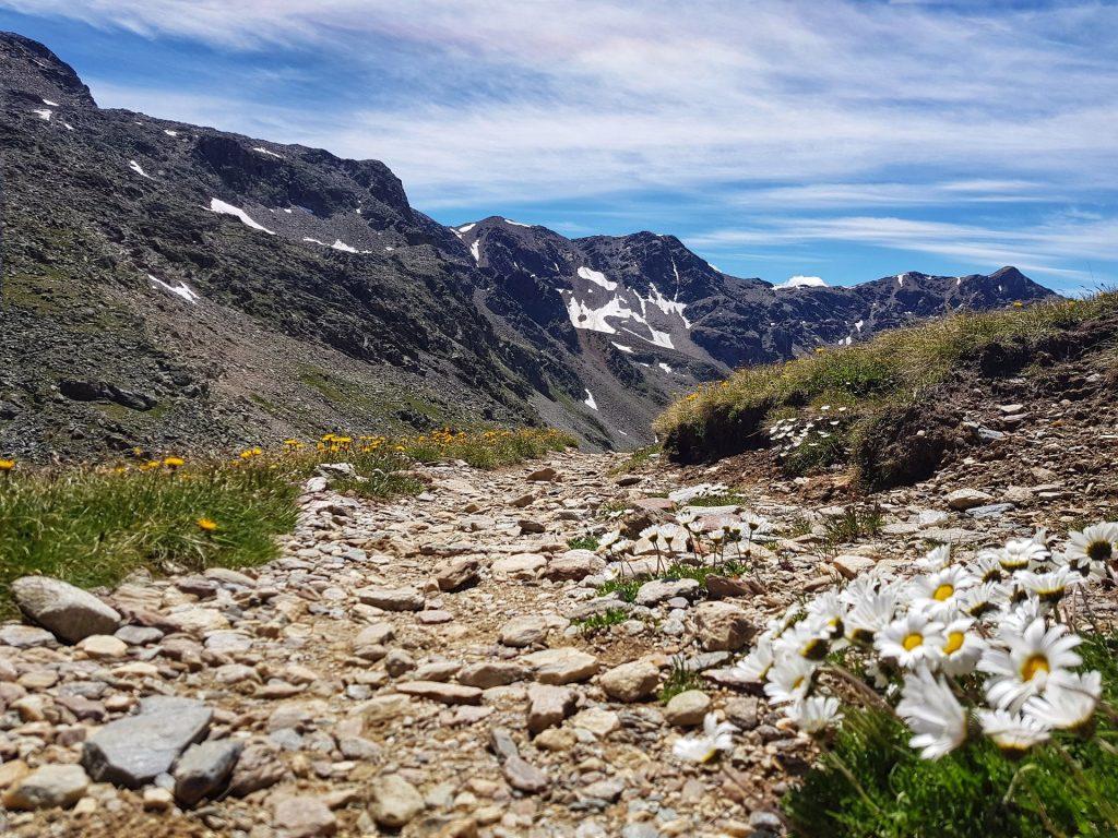 Fiore Monte Vallecetta verso Bocca di profa