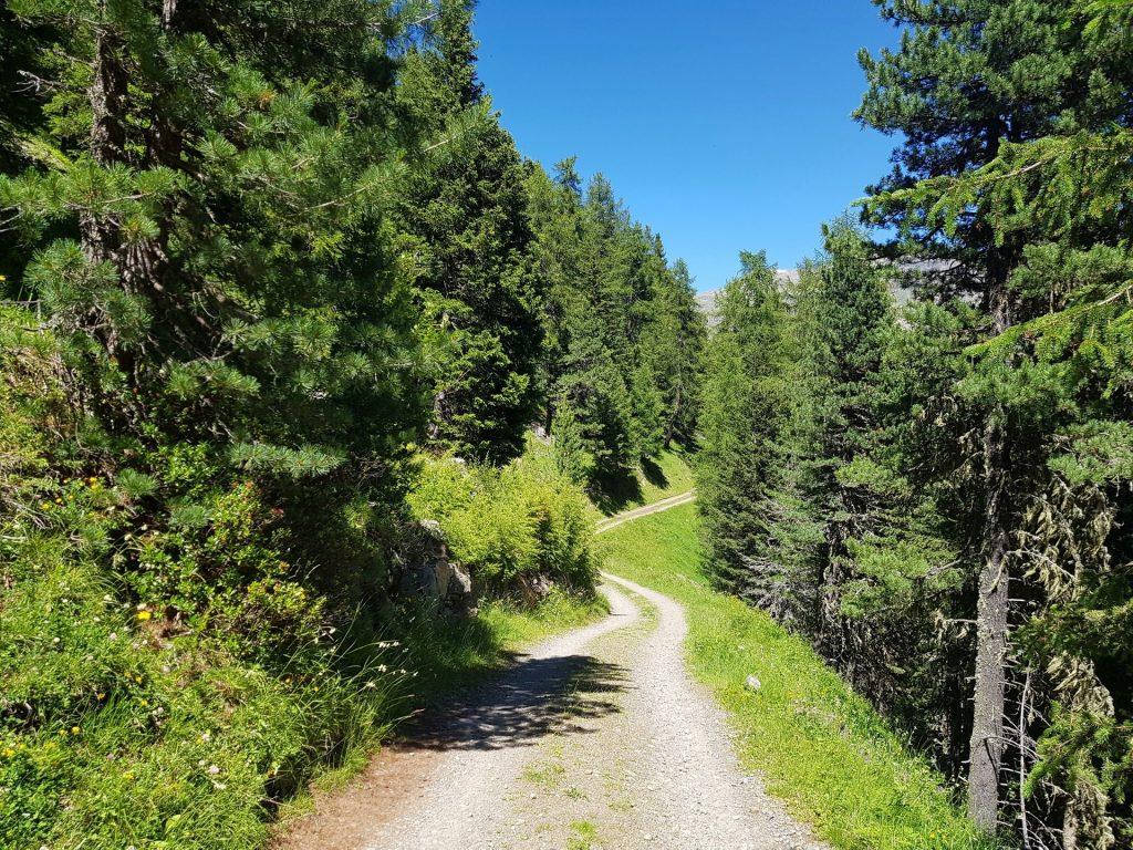 Sentiero nel Bosco da Bormio 3000 a Bormio 2000
