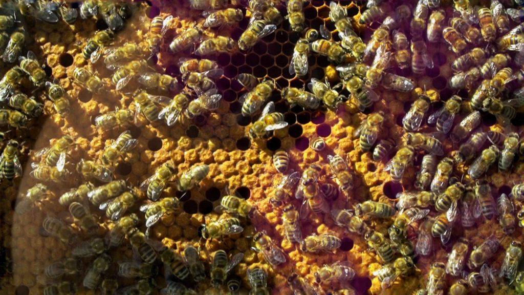 magico mondo delle api