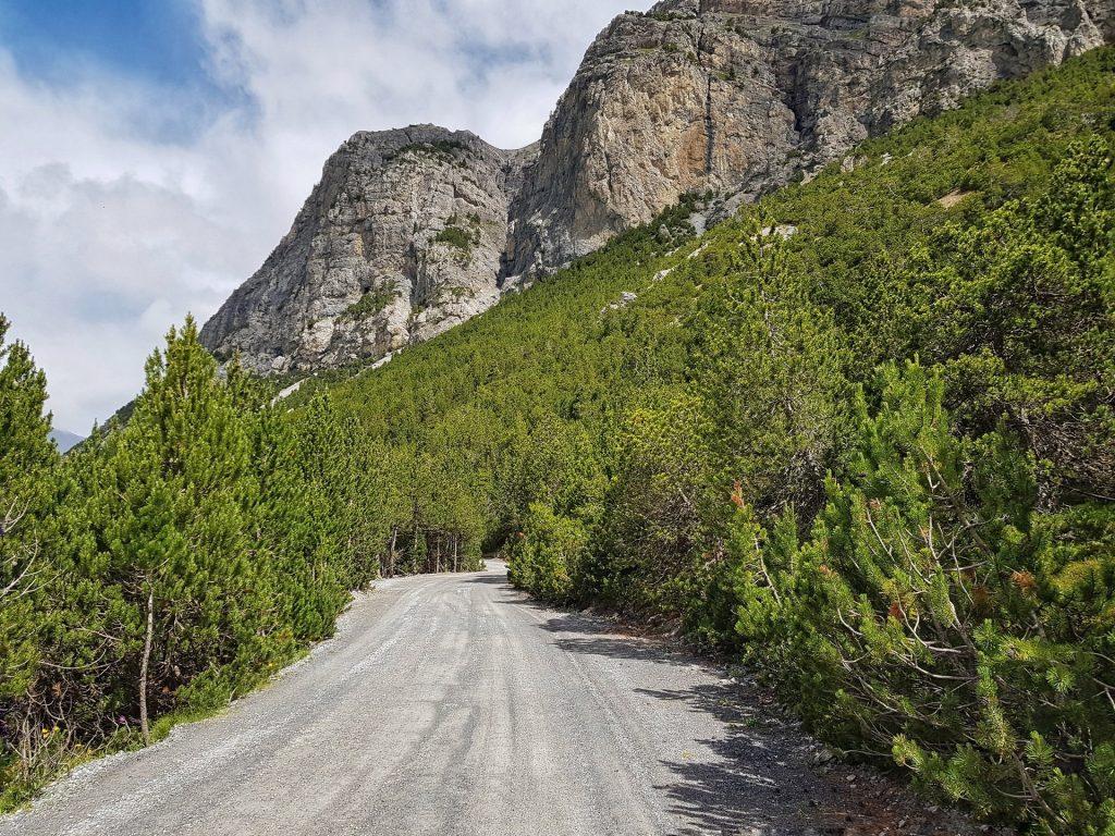 sentiero conifere lago di cancano